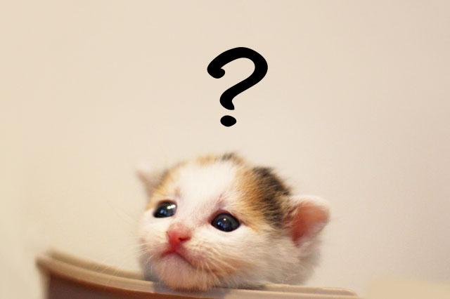 ペット不可の物件に疑問を抱くネコ