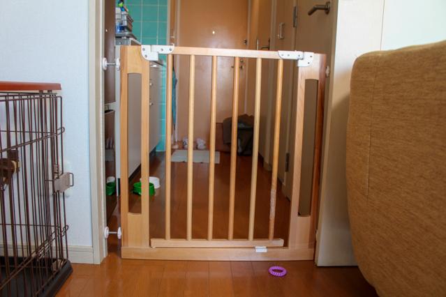 お客さんが大好きなフィコが玄関へ飛び出さないようにゲートも取り付けていた
