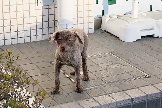 唐木田の犬