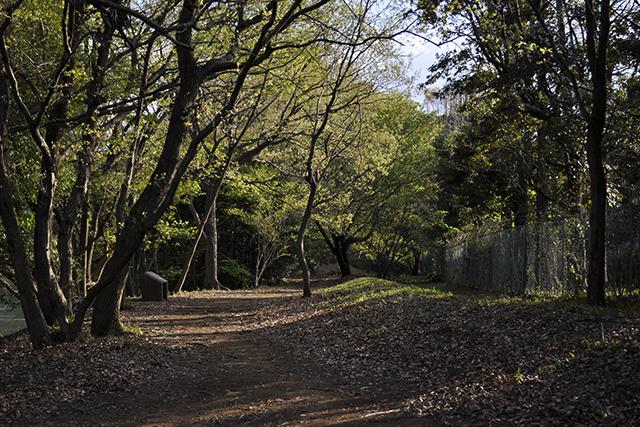 唐木田の雑木林
