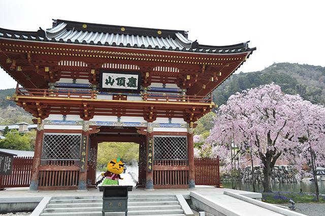 勝尾寺と滝ノ道ゆずる