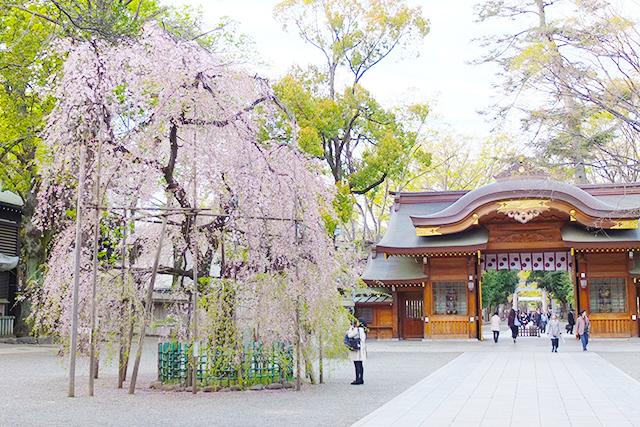 大黒魂神社の桜