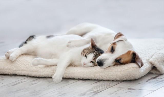 犬と猫がタオルの上に横たわっている