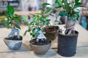 ビリさんの鉢植え作品の一部