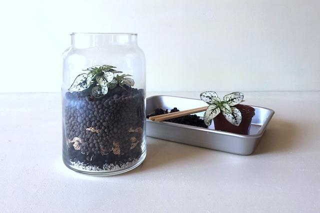 インテリアボトルを使ったテラリウムの作り方:インテリアボトルに植物を植える
