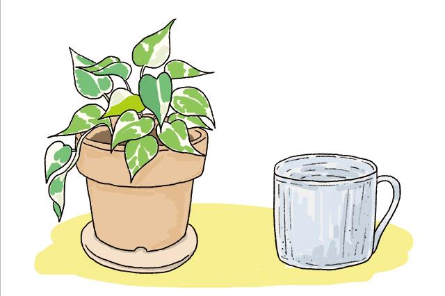 土の気のアイテム