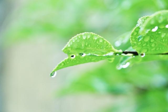 梅雨の時期は湿気との戦い