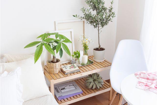 【一人暮らし × インテリア】インスタグラマーmariaさんのお部屋:パキラやオリーブの鉢植えのほか、季節の切り花もかわいらしく生けている