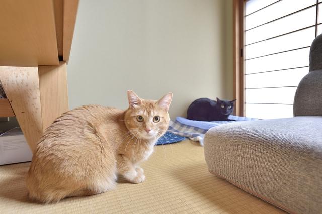 ペット可メゾネット賃貸に住む鈴木夫妻の愛猫・あんこときなこ