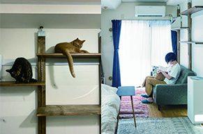 【猫との暮らし】2匹の保護猫と一人暮らしの部屋づくり。キャットタワーもDIY!