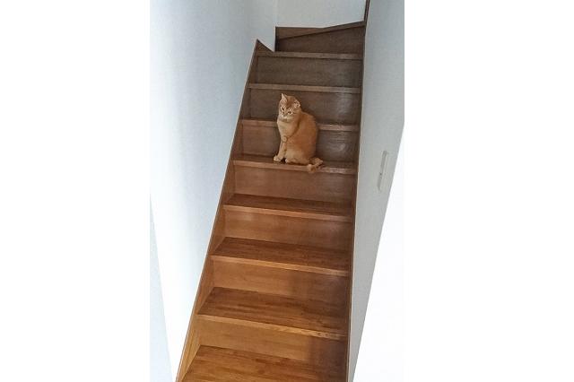 ペット可のメゾネット賃貸の階段で遊ぶ、鈴木ご夫妻の愛猫・きなこ