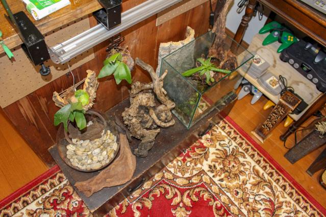 一人暮らし中の田中さん宅に飾られている食虫植物