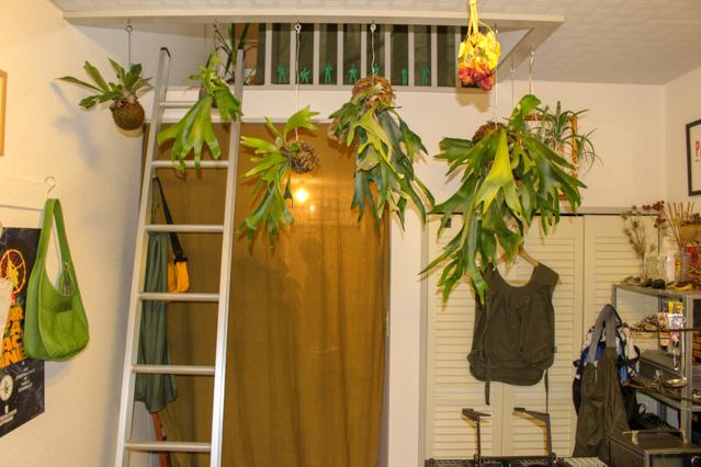 一人暮らし中の田中さんの部屋に飾られている観葉植物たち