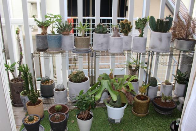 多肉植物・サボテンが多く並ぶ一人暮らし中の田中さん宅のベランダ