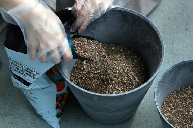 ハーブの寄植えの作り方:鉢の半分ほどまで土を入れる