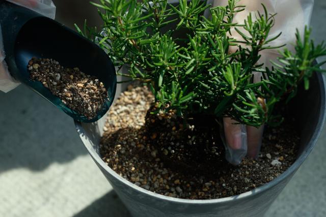 ハーブの寄植えの作り方:苗の周りに土をかぶせる