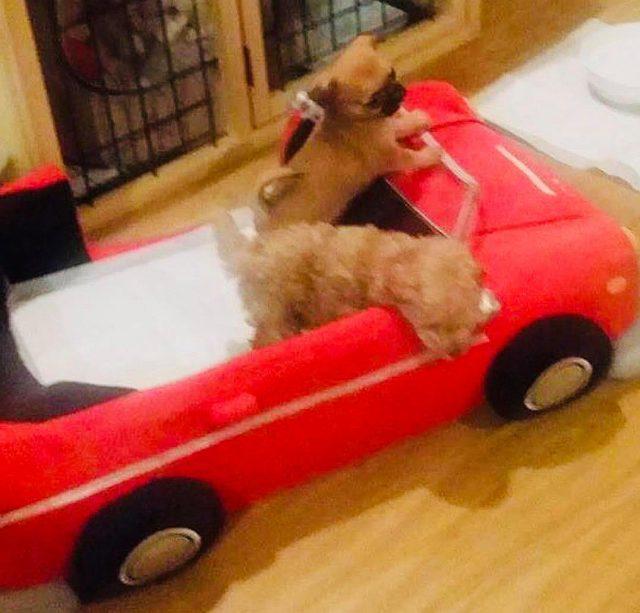 ペット可賃貸物件で一人暮らし中のFさんの2頭の愛犬