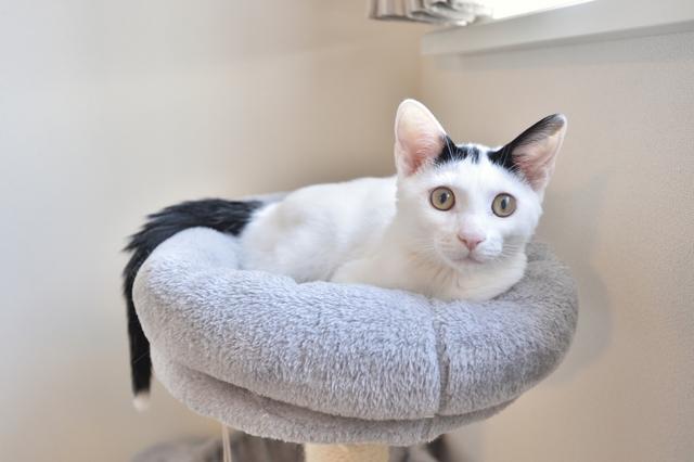 2LDKのペット可賃貸物件に住むSさんAさん家族の愛猫・百(もも)