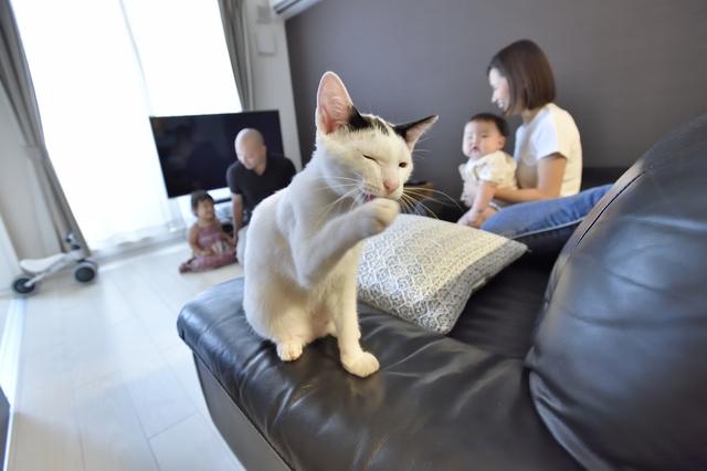 広々とした2LDKの賃貸物件で猫と一緒にくつろぐSさんとAさん家族