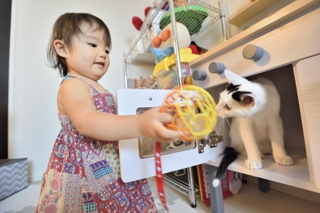 2LDKのペット可賃貸物件に住むSさんAさん家族の愛猫・百(もも)が子供と一緒に遊ぶ様子