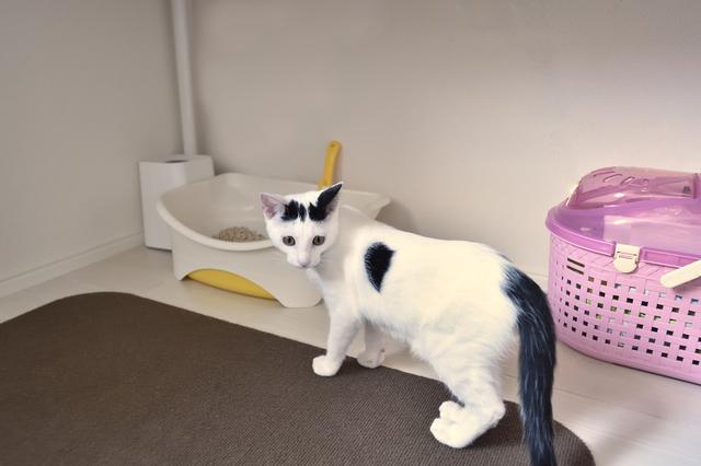 2LDKのペット可賃貸物件に住むSさんAさん家族の愛猫・百(もも)のトイレ
