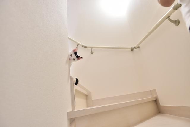 2LDKのペット可賃貸物件に住むSさんAさん家族の愛猫・百(もも)が階段でかくれんぼしている様子