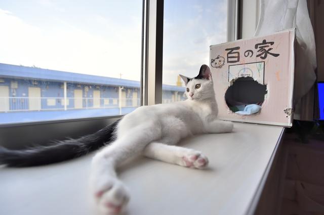 2LDKのペット可賃貸物件に住むSさんAさん家族の愛猫・百(もも)が窓辺で日向ぼっこする様子