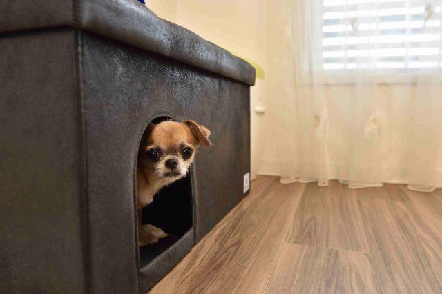 ペット可賃貸物件で一人暮らし中のFさん宅に設置された犬用のおうちをかねたソファ
