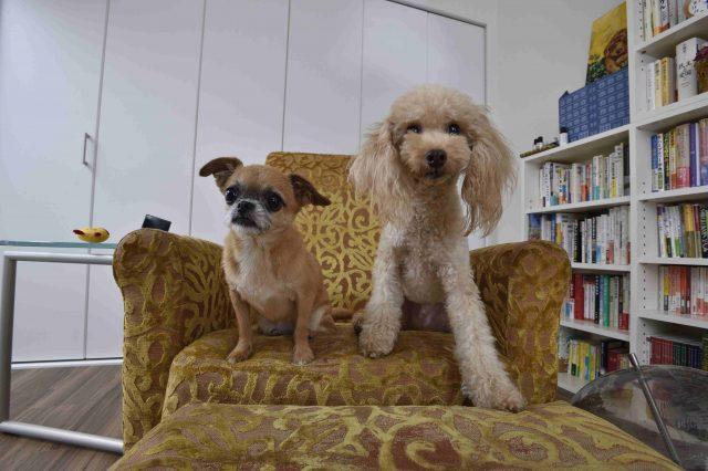 ペット可賃貸物件で一人暮らし中のFさんの愛犬