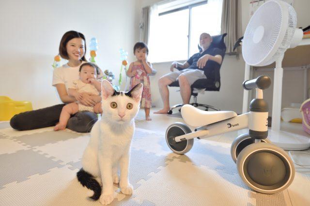 猫を飼っているSさんとAさん家族