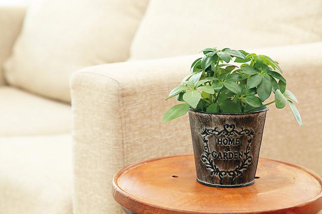 Dr.コパの風水インテリア術2.観葉植物は部屋のどこかに必ず飾る