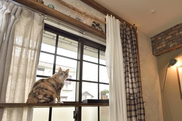 【キャットウォークをDIY】是木さんと猫のうり