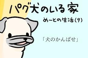 【パグ犬のいる家】めーとの生活(9)「犬のかんばせ」