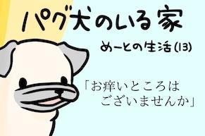 【パグ犬のいる家】めーとの生活(13)「お痒いところはございませんか」