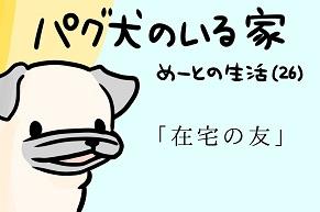 【パグ犬のいる家】めーとの生活(26)「在宅の友」