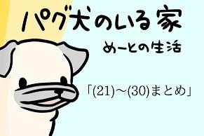 パグ犬_30回まとめ_アイキャッチ