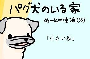 【パグ犬のいる家】めーとの生活(35)「小さい秋」