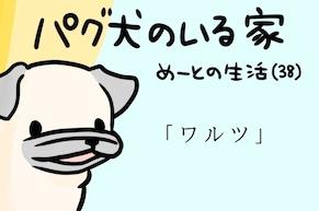 【パグ犬のいる家】めーとの生活(38)「ワルツ」アイキャッチ