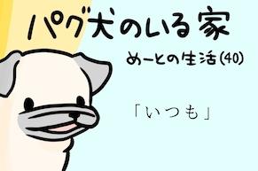 【パグ犬のいる家】めーとの生活(40)「いつも」アイキャッチ