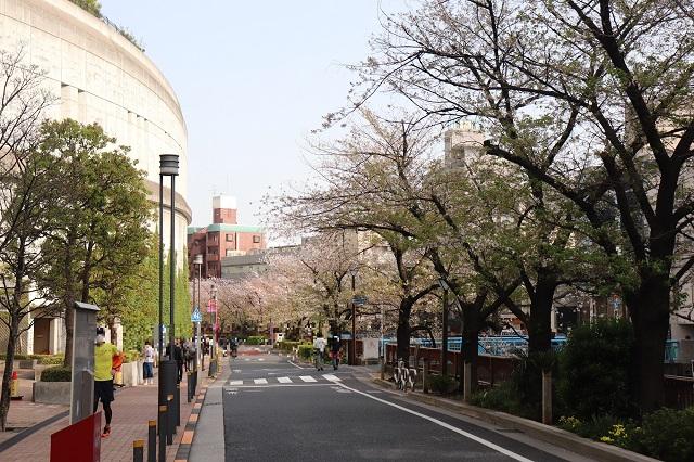 東急田園都市線・池尻大橋駅付近の目黒川緑道
